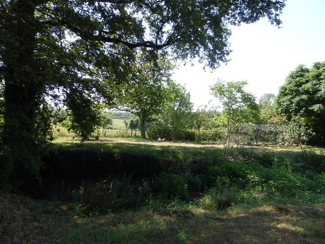 Private Smallholding (2Ha) with Swimming Pool - Business Opportunities Here! 10332